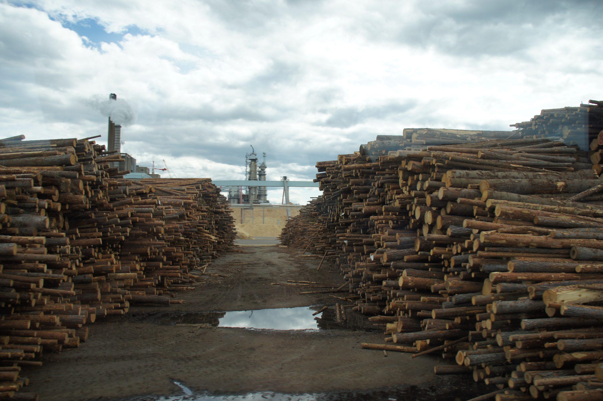 Das Holzlager der Papiermühle von Iggesund. Alle acht Minuten wird hier ein 40-Tonner entladen